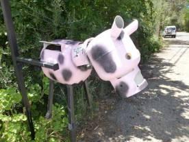 Spotted Piggy, Cherry Gardens, SA